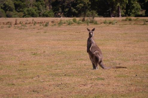 16-UberMenu-Portfolios-de-Voyage-Australie